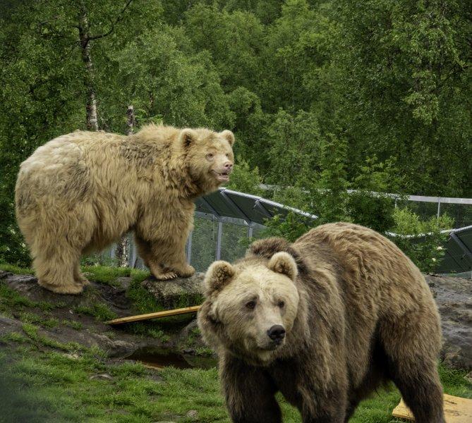 2-Bears
