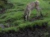 Deer-foal