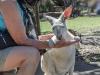 doris-feeding-with-blur