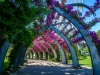 flowered-archway1