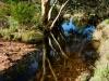 stream-in-the-olgas-katatjuta