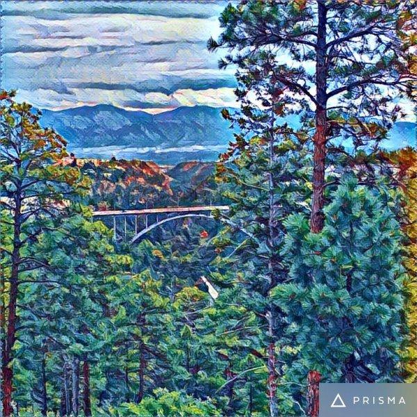 Bridge and Forest scene