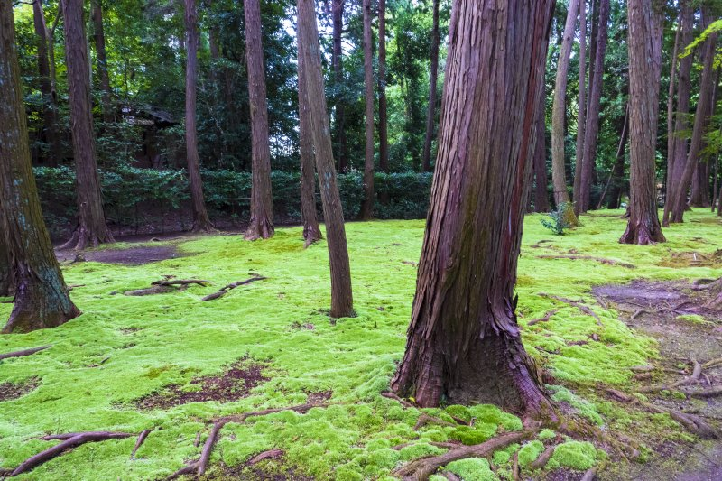Moss at Toshodai-ji Temple