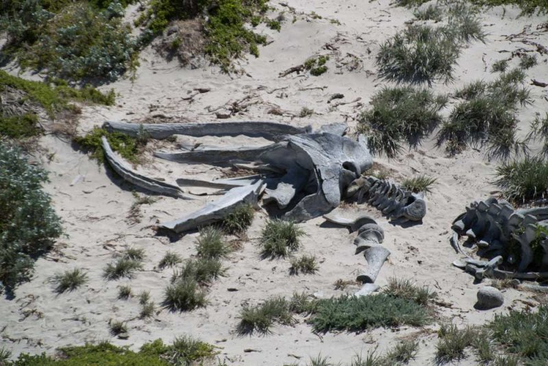 Beached-Whale-bones