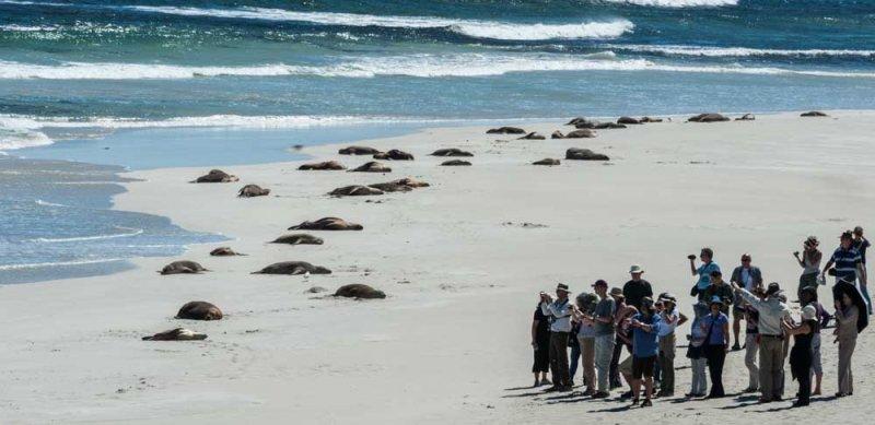 Ranger-led-Groups-on-Seal-Bay