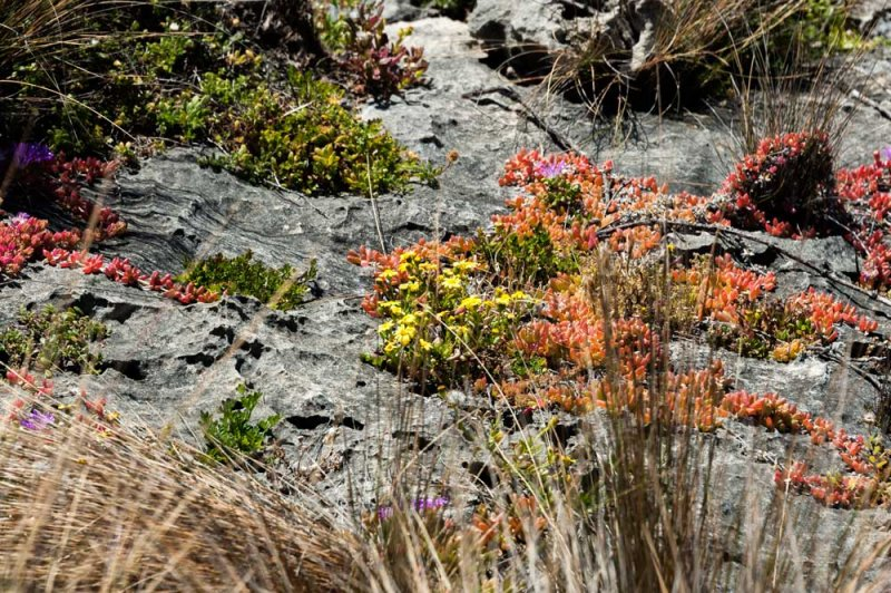 Rocks-and-Plants