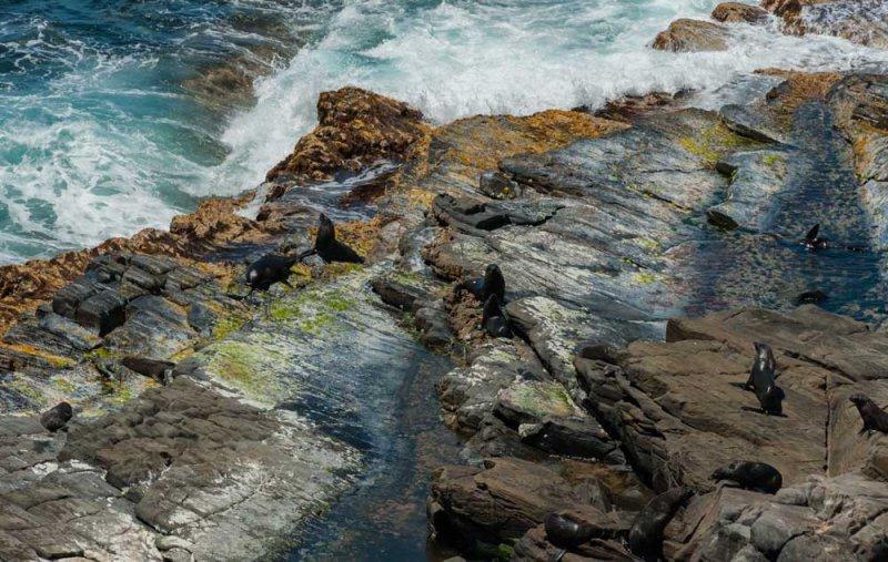 Sea-Lions-on-the Rocks