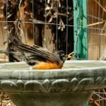 Bath Time bird bath