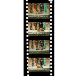 Robin Bath Time film strip
