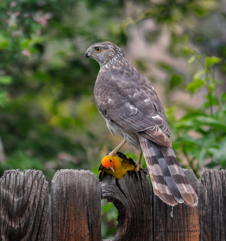 backyard birds fords fotos u0026 blog