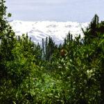 Sierra Nevadas from Alhambra