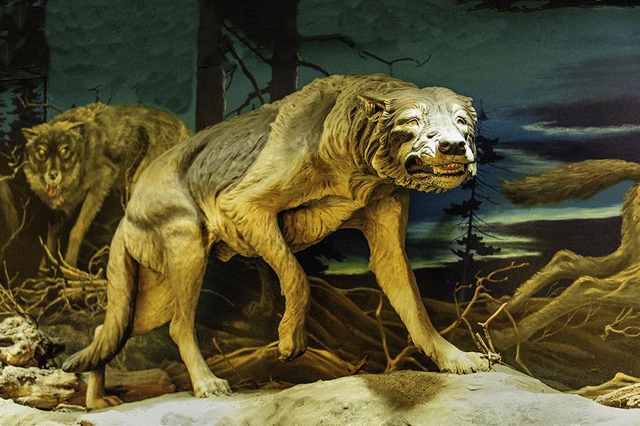 Trapped in tar: The Ice Age animals of Rancho La Brea