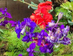 Flowers photo iphone