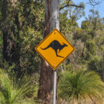 Kangaroo Common Road Sign