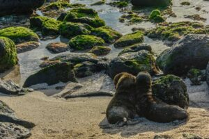 Sea Lion babies seen on a galapagos Island