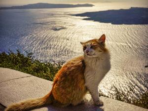 Cat Posing at Sunset copy